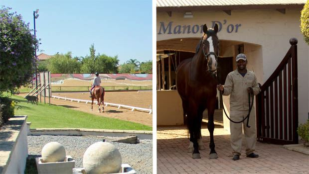 Riding and Stabling at Manor D'or